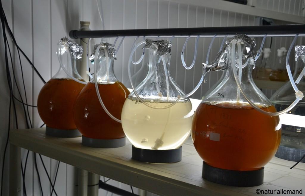 Visite de l'écloserie d'huîtres Thierry Labadie